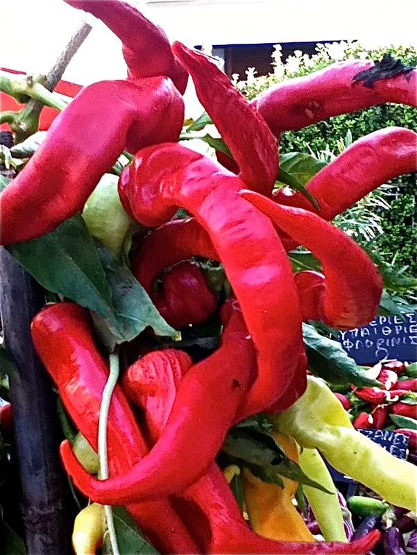 Κακομούτσουνες αλλά και πεντανόστιμες οι τελευταίες πιπεριές του αποκαλόκαιρου