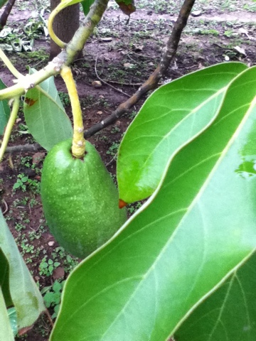 Ενα καταπράσινο κουκλάκι , Ιανουάριο μήνα , έτοιμα από τον Νοέμβριο...