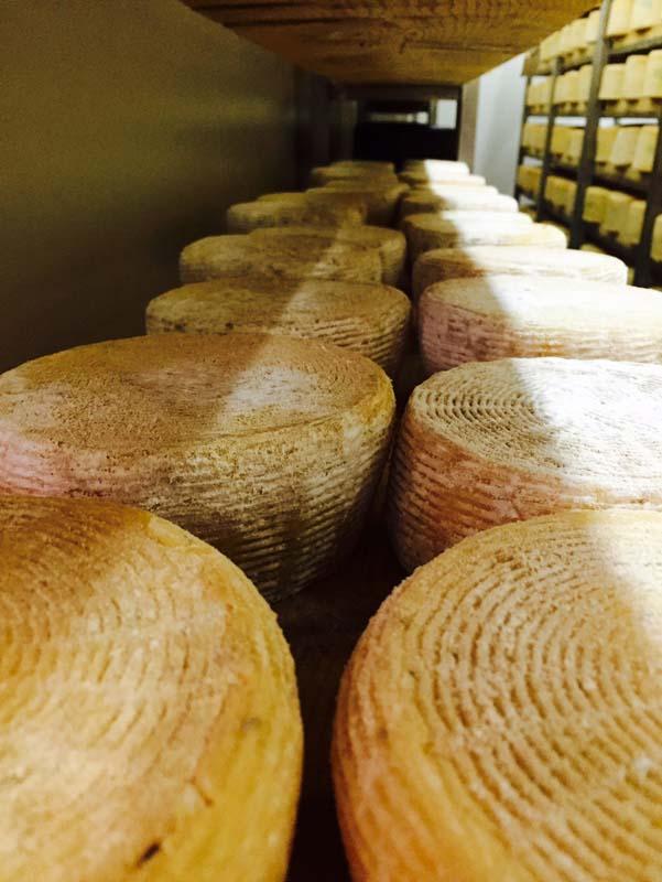 Τα τυριά Σαν Μιχάλη ωριμάζουν στο μικρό τυροκομελιο Ζωζεφίνος της Σύρου. παρασκευάζονται με 100% παστεριωμένο αγελαδινό γάλα.