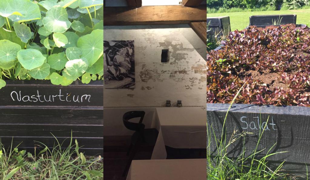 Καλλιέργεια καπουτσίνου (για τα διακοσμητικά λουλουδάκια και φύλλα που χρησιμοποιούν οι σεφ ) έξω από το εστιατόριο 56 Grader της Κοπεγχάγης / To 56 Grader στεγάζεται σε μιά παλιά πυριτιδαποθήκη στα παλιά ναυπηγεία της Κοπεγχάγης, μιά περιοχή που φιλοξενεί πολλά και ενδιαφέροντα εστατόρια που πιστεύουν στα οικολογικά προιόντα και την βιωσιμότητα του φαγητού. Λίγο πιό κάτω θα ανοίξει το καινούργιο ΝΟΜΑ. Στους τοίχους ασπρόμαυρες φωτογραφίες από ραπάνια, ρίζες και λαχανικά / Κόκκινο λάχανο για τις σαλάτες του 56 Grader